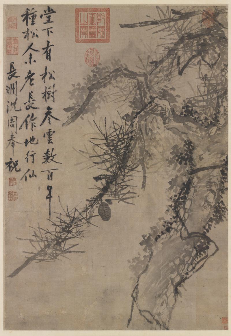 shen-zhou_ancient-pine
