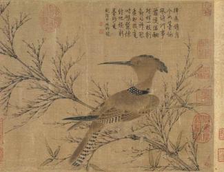Hoopoo on Bamboo