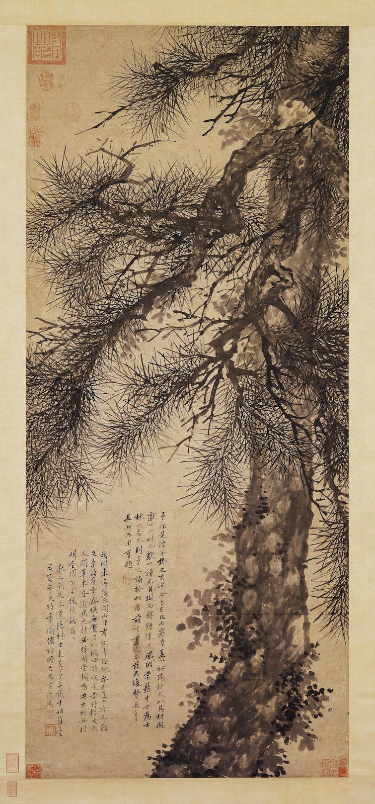 shen-zhou_giant-pine