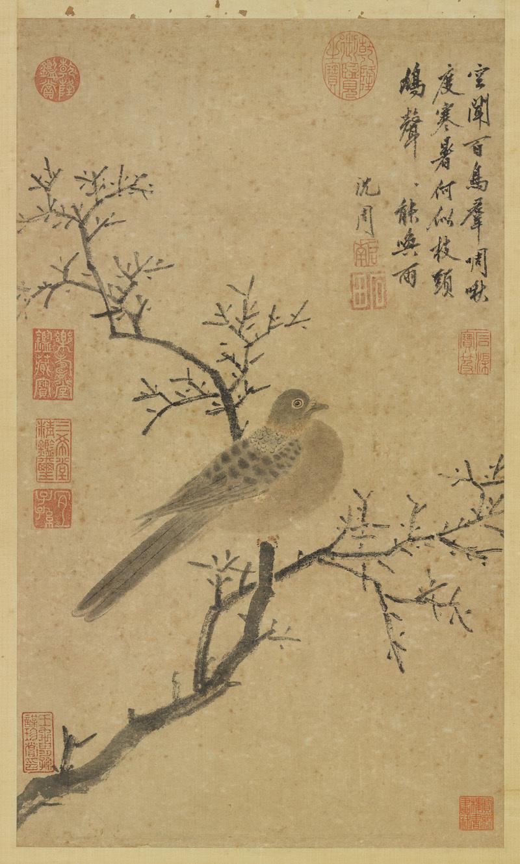 shen-zhou_turtle-dove